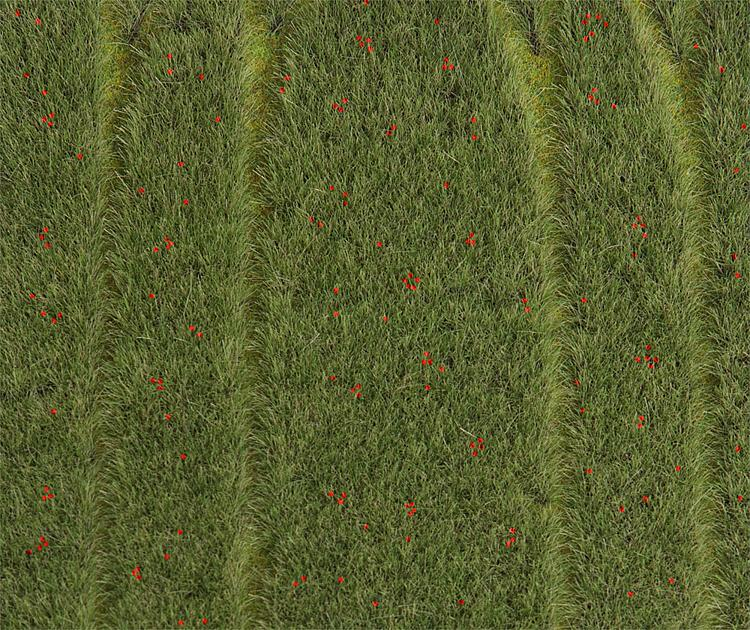 Premium Landscape - (field with poppies)