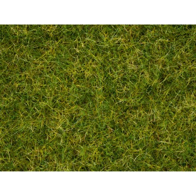 Master Grass Blend Summer Meadow, 2.5-6m
