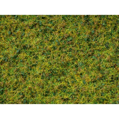 Master Grass Blend Cow Pasture, 2.5-6m